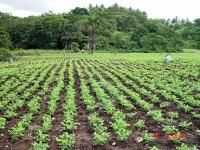 The farm Stela's paradise.